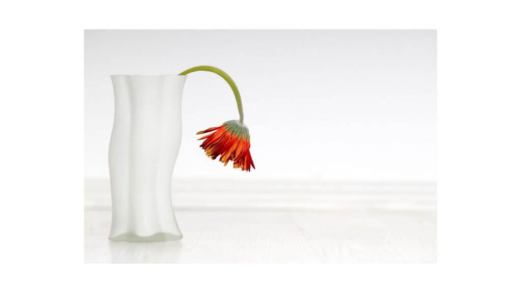 萎れた花の写真