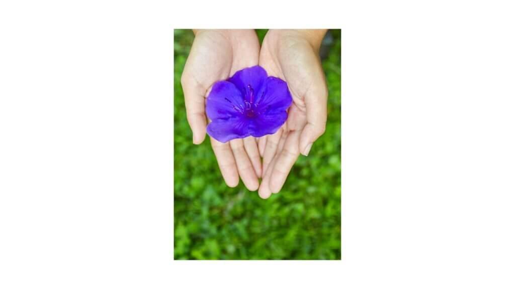 お花を差し出す手の写真