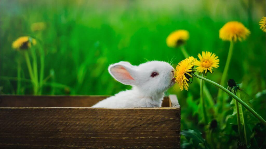 ウサギの写真